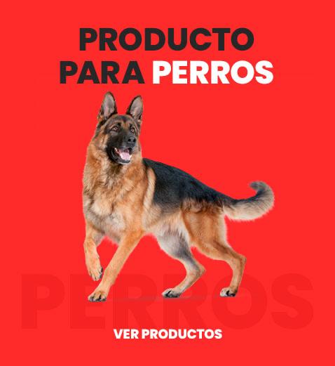 producto_perros